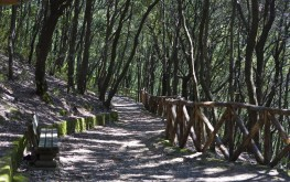bosco della maddalena ischia